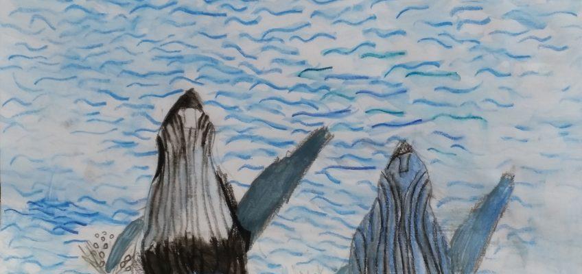 Les baleines à bosse